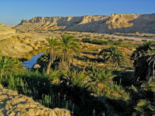 An oasis [Image: Wikimedia Commons]